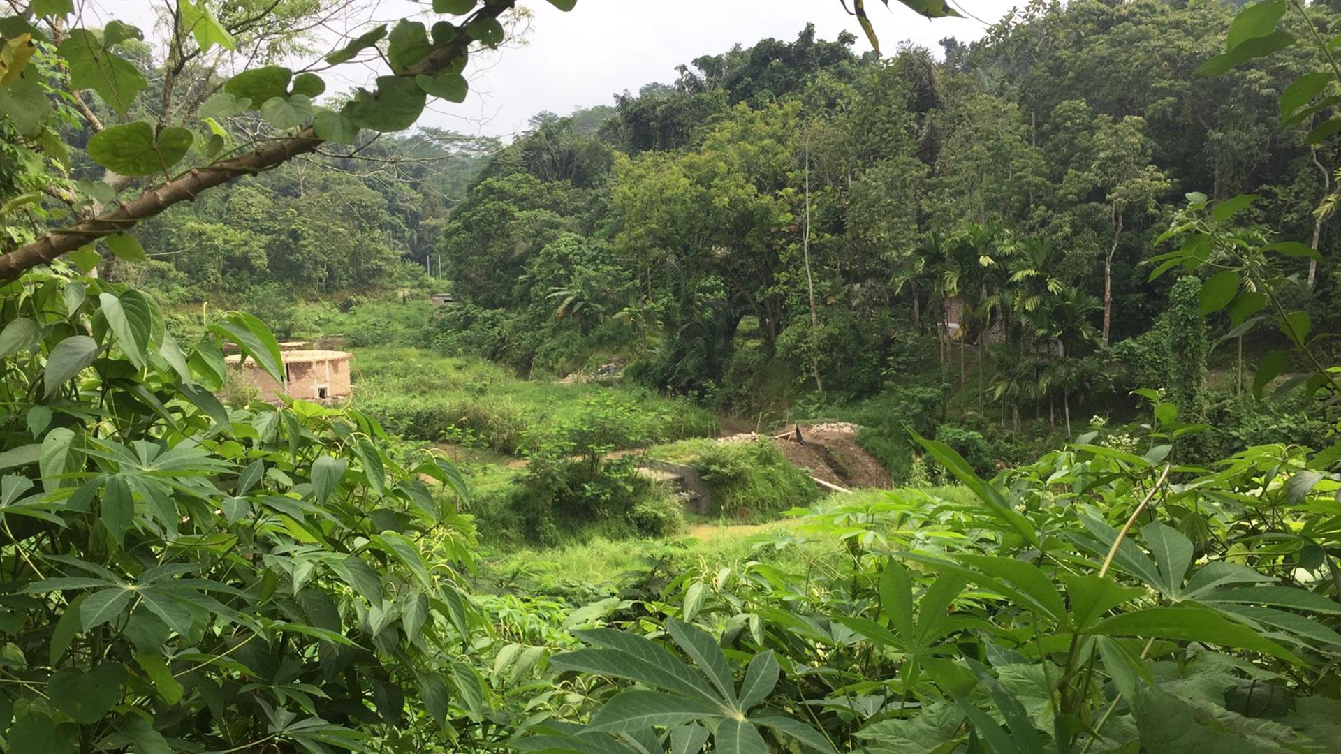 https://rfacdn.nz/zoo/assets/media/volunteers-in-sumatra-gallery-2.jpg