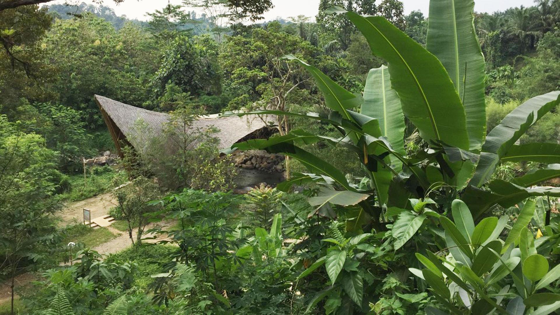 https://rfacdn.nz/zoo/assets/media/volunteers-in-sumatra-gallery-6.jpg