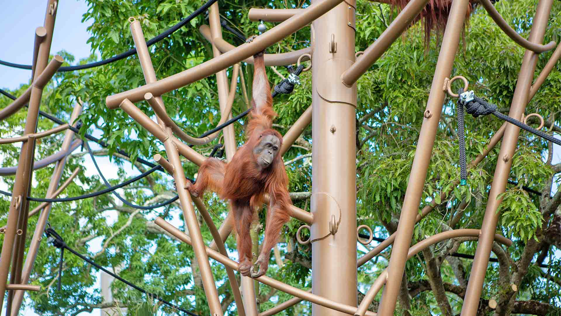 https://rfacdn.nz/zoo/assets/media/wanita-on-jungle-track-gallery-2.jpg