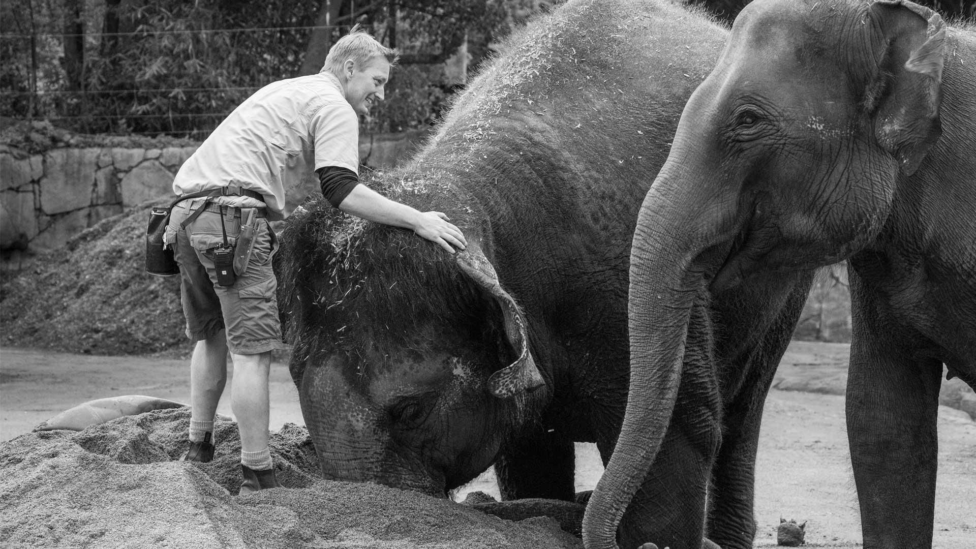 https://rfacdn.nz/zoo/assets/media/world-elephant-day-gallery-1.jpg