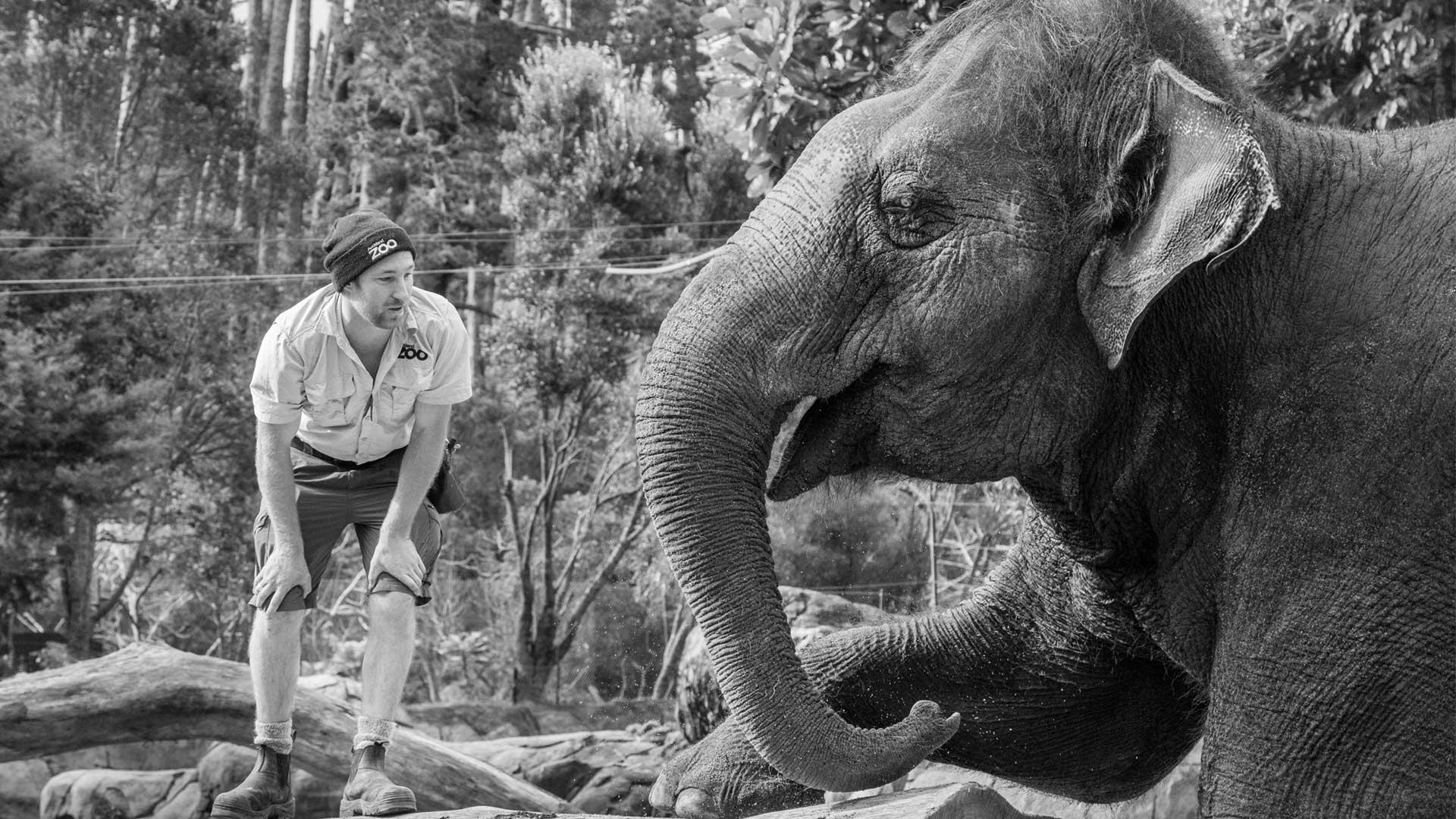https://rfacdn.nz/zoo/assets/media/world-elephant-day-gallery-10.jpg