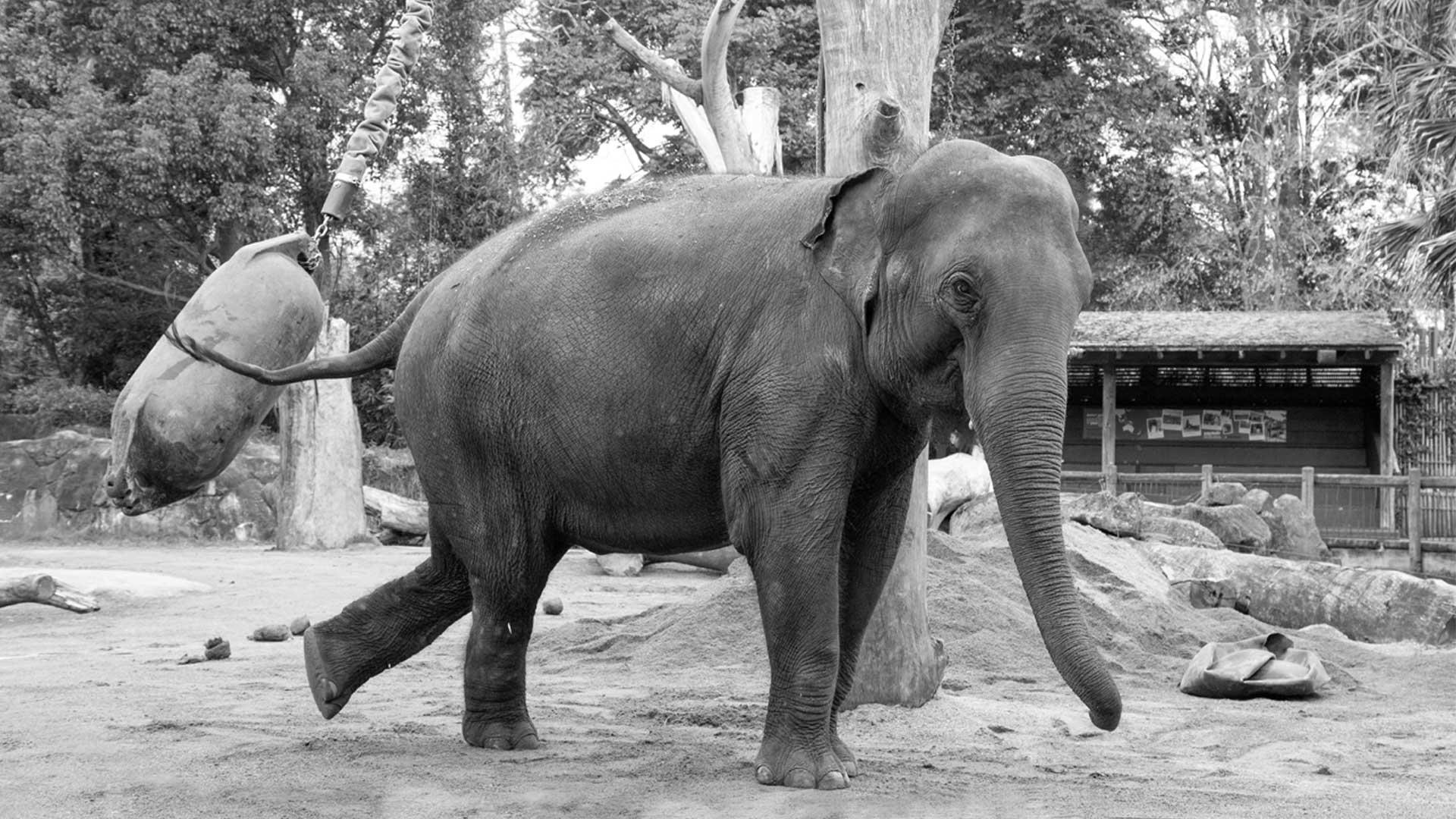 https://rfacdn.nz/zoo/assets/media/world-elephant-day-gallery-11.jpg