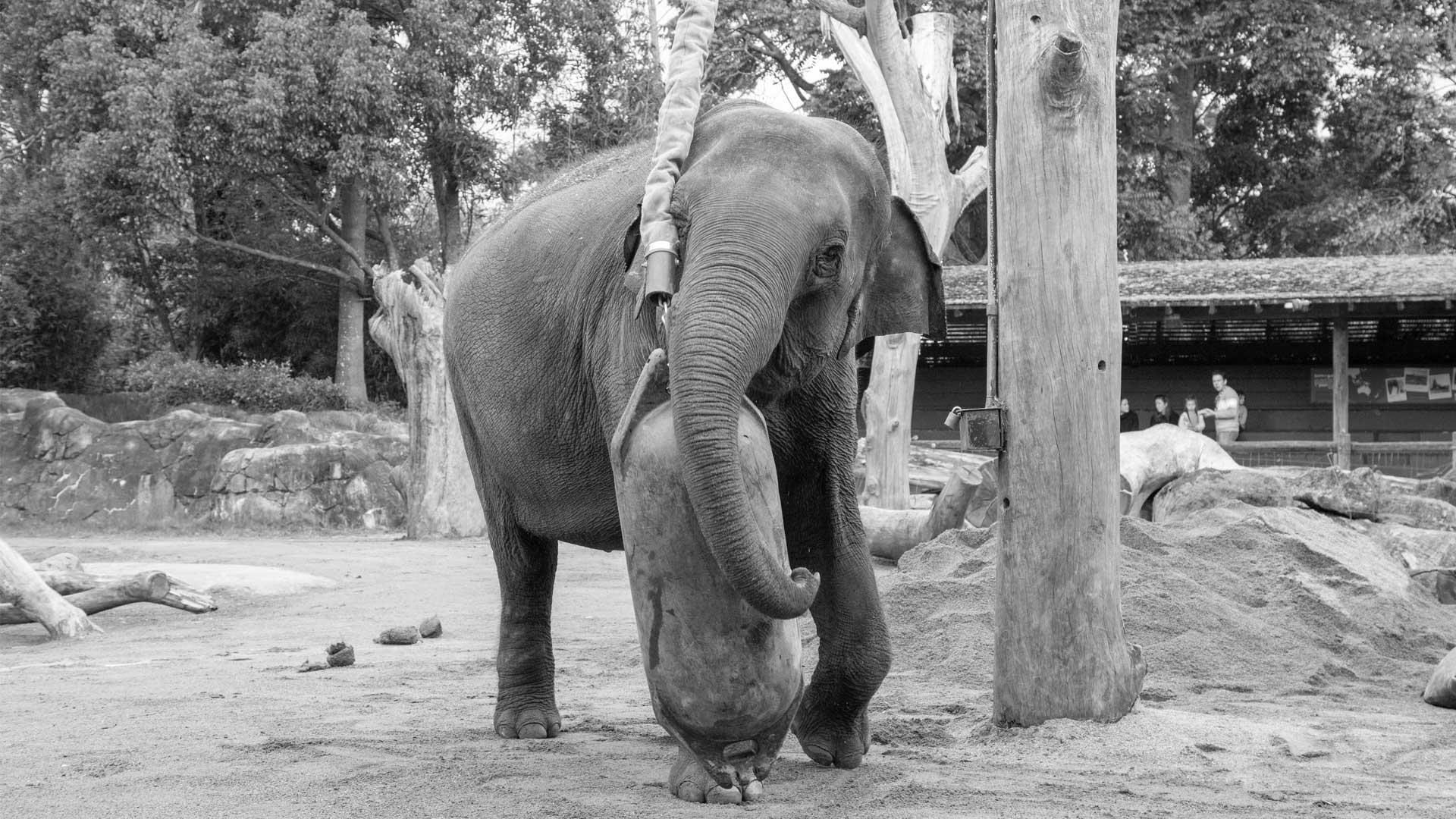 https://rfacdn.nz/zoo/assets/media/world-elephant-day-gallery-12.jpg