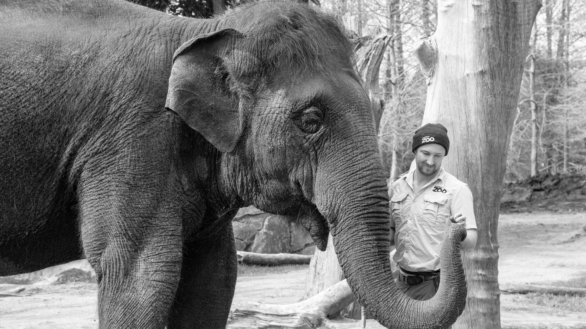 https://rfacdn.nz/zoo/assets/media/world-elephant-day-gallery-13.jpg