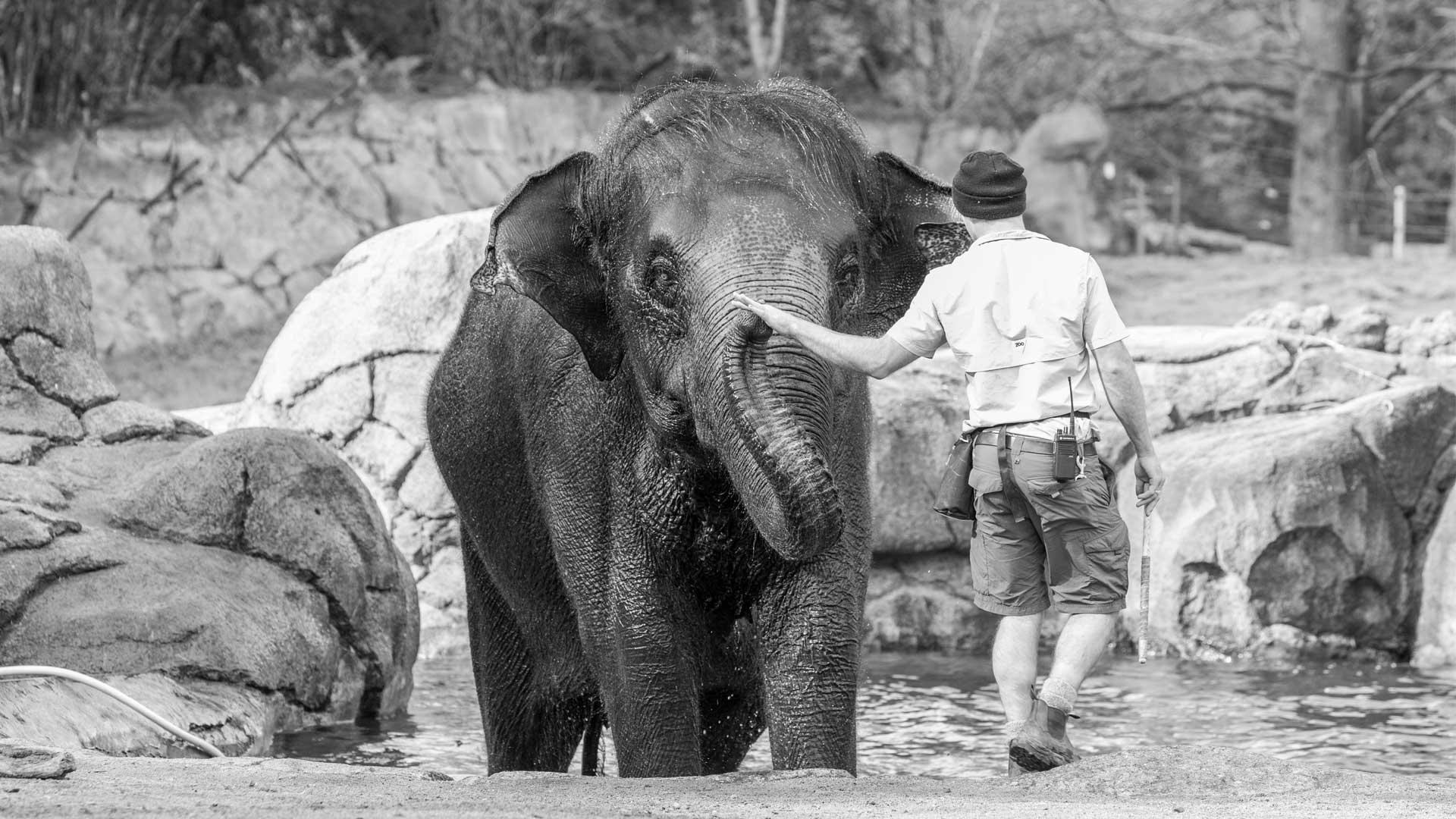 https://rfacdn.nz/zoo/assets/media/world-elephant-day-gallery-2.jpg