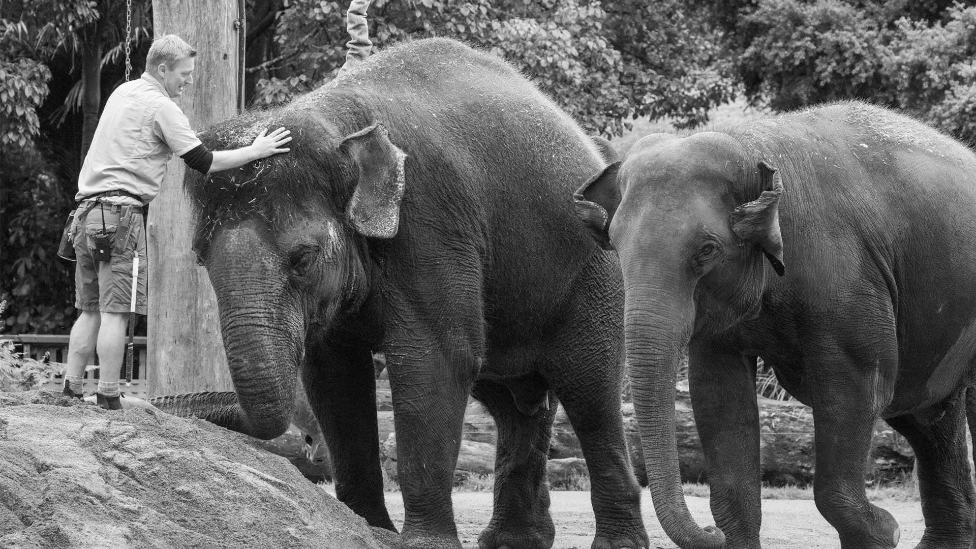 https://rfacdn.nz/zoo/assets/media/world-elephant-day-gallery-3.jpg
