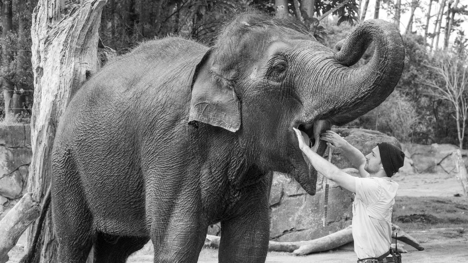 https://rfacdn.nz/zoo/assets/media/world-elephant-day-gallery-4.jpg