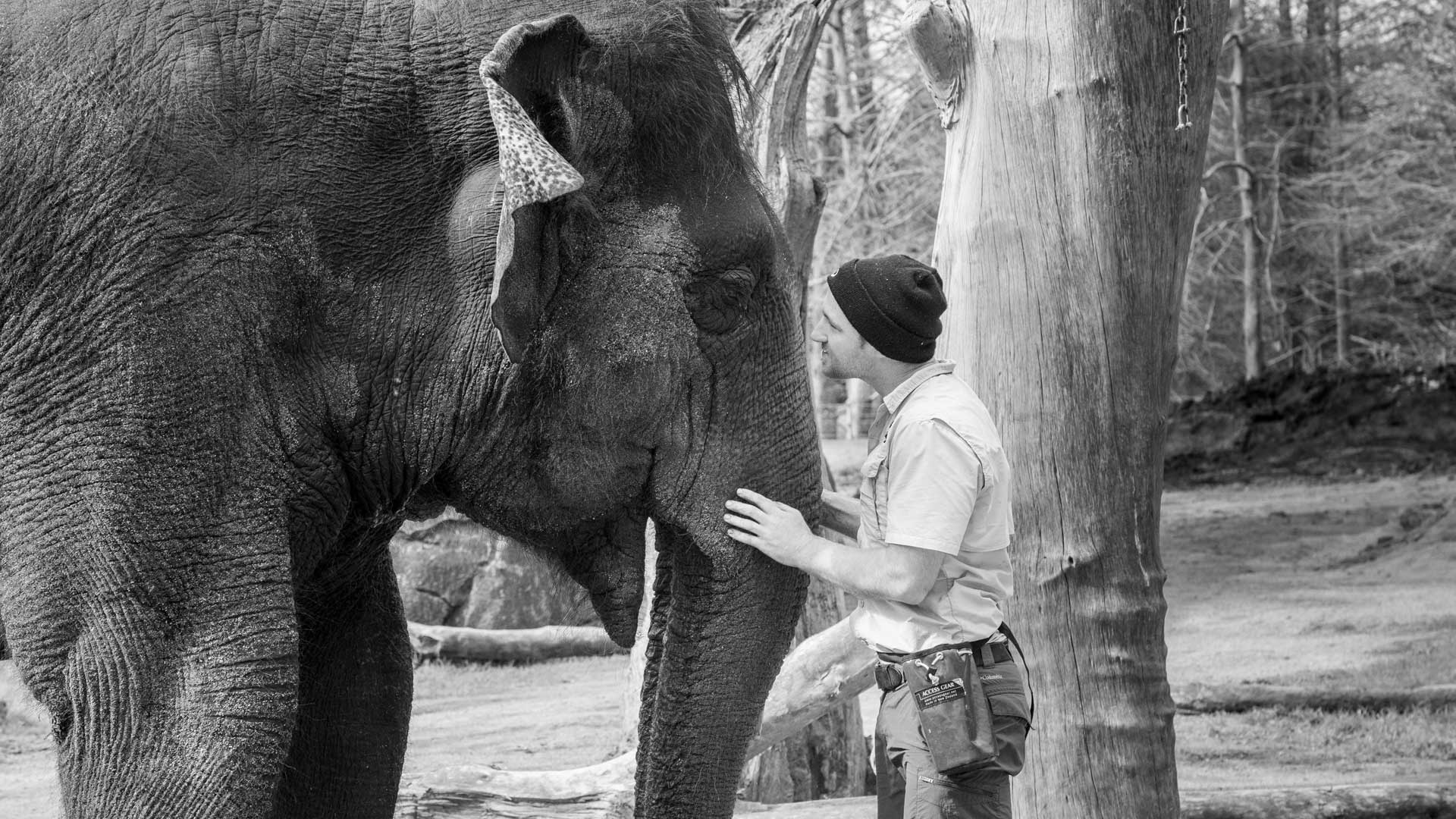 https://rfacdn.nz/zoo/assets/media/world-elephant-day-gallery-7.jpg