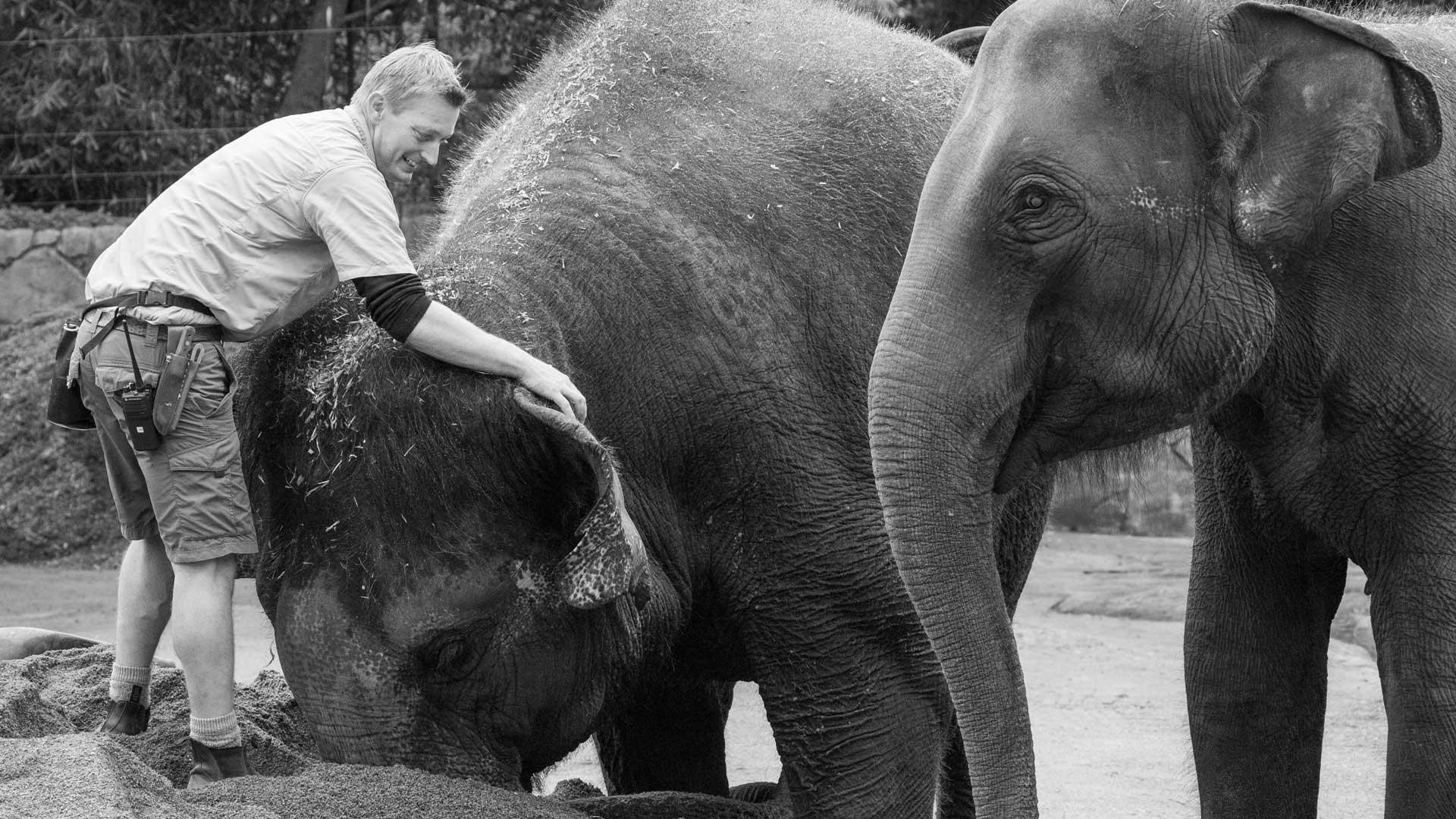 https://rfacdn.nz/zoo/assets/media/world-elephant-day-gallery-8.jpg