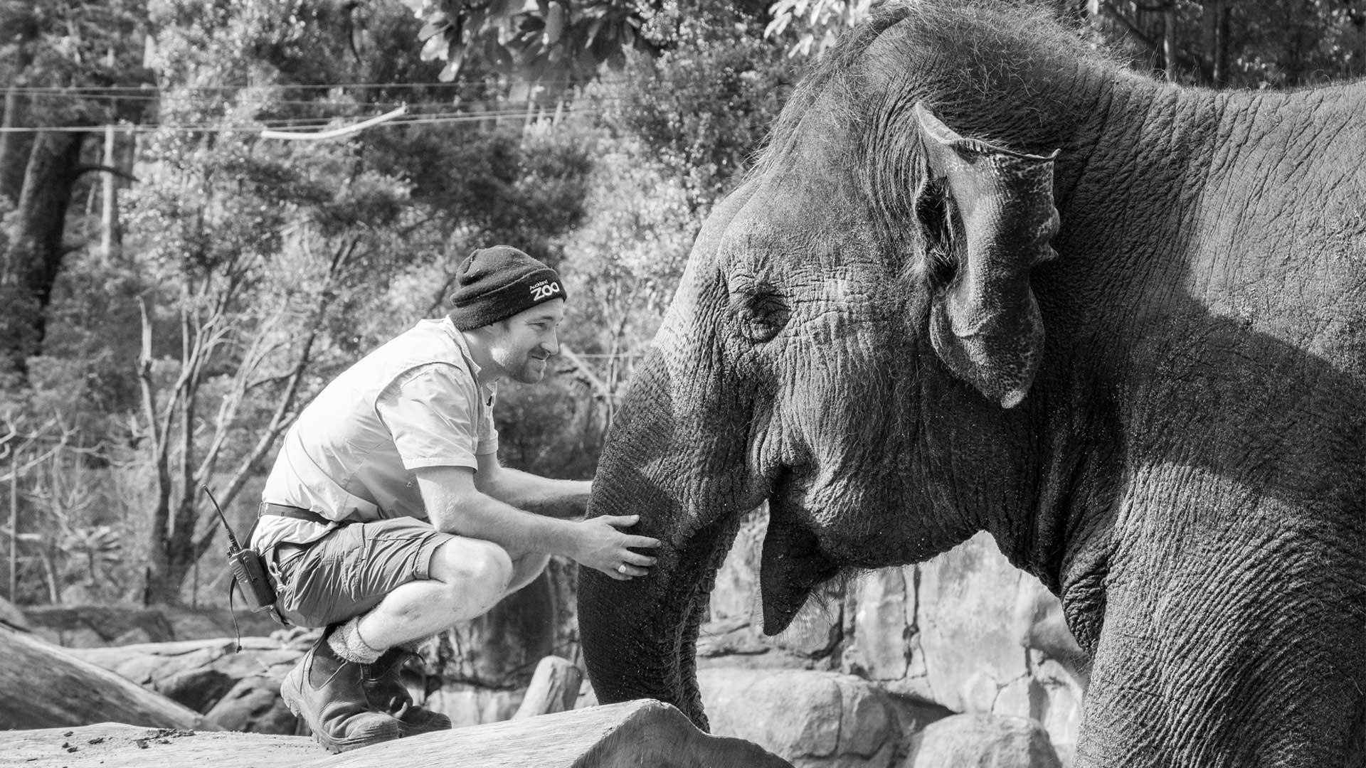 https://rfacdn.nz/zoo/assets/media/world-elephant-day-gallery-9.jpg